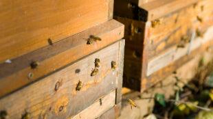 Pszczoły ruszyły na wiosenne obloty