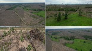 Wystarczyła jedna noc. Nawałnica zniszczyła ponad 100 tysięcy hektarów lasu