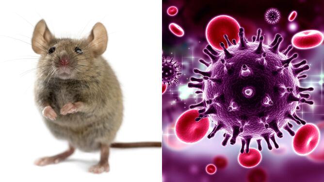 Zmodyfikowali leki i wycięli geny HIV z komórek. Nadzieja na przełom w leczeniu